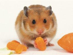 Killer Hamster