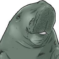 t-dugong